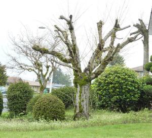 Good Tree Bad Tree
