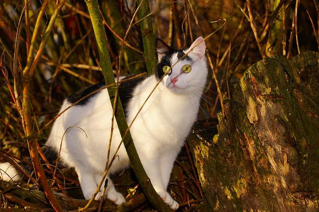 cat-1881599_640